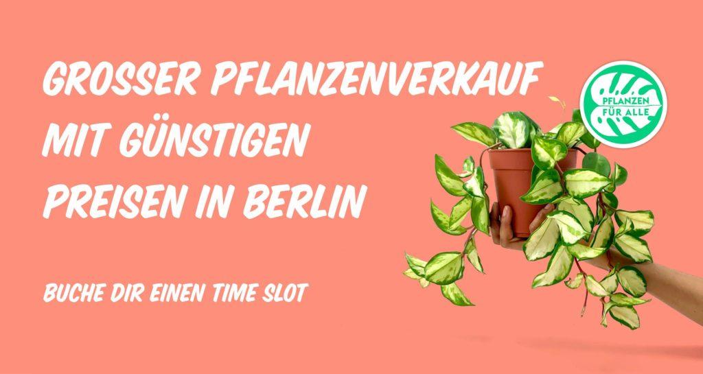 Pflanzen für Alle Pflanzenmarkt in der Alten Münze